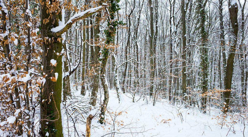 Tišina u šumi